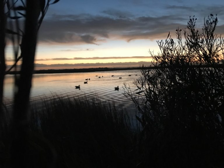 Texas Coastal Duck Hunt
